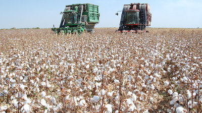 US bans imports of Turkmen cotton goods following child and forced labour claims