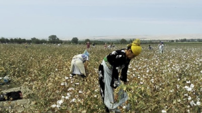 World Bank urged to suspend loans to stop forced labour in Uzbek cotton industry